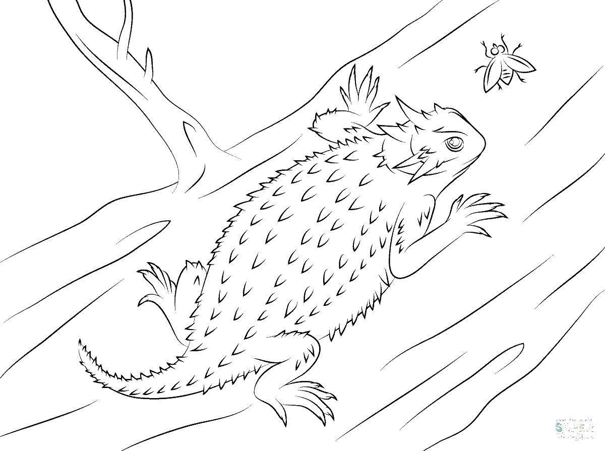 Раскраски ящерица  Ящерица с шипами