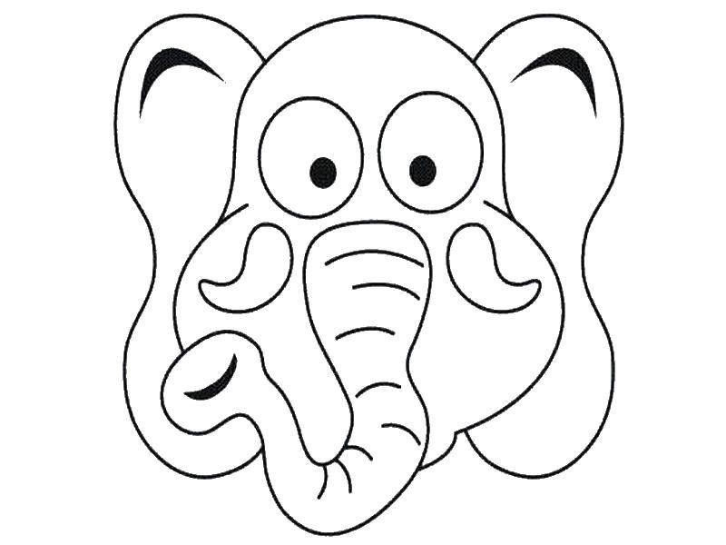 Морда  слона