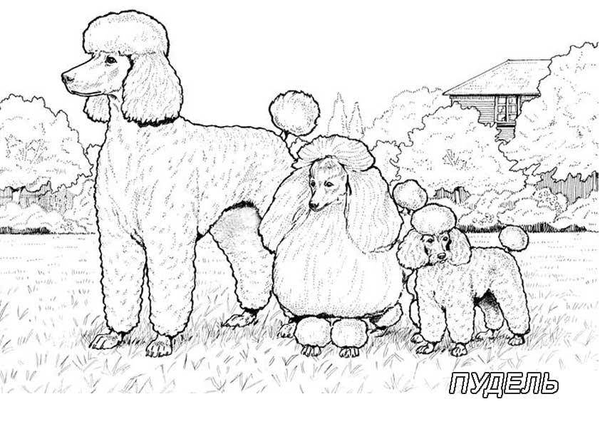 раскраски раскраска собак