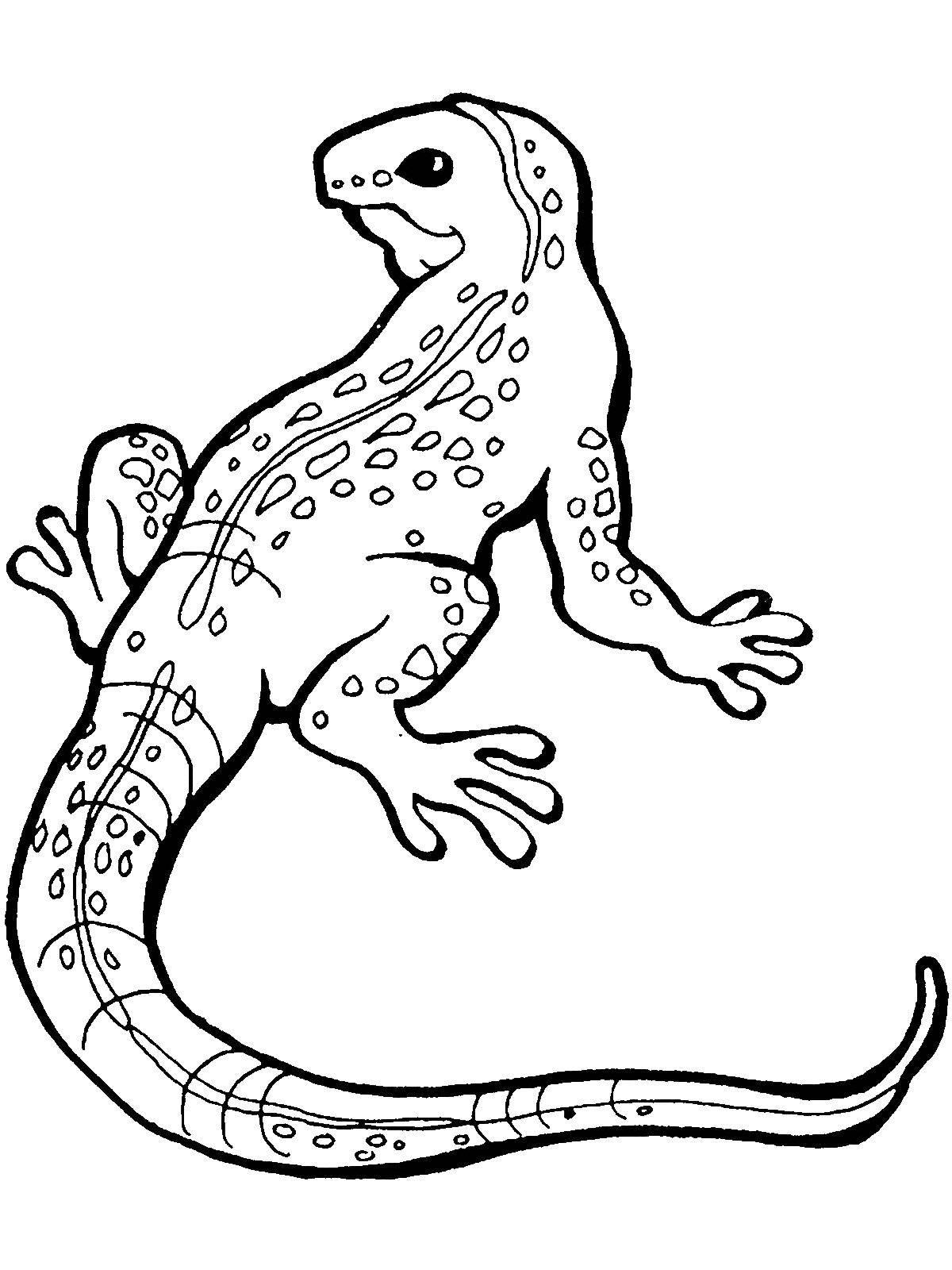 Раскраски ящерица  Ящер