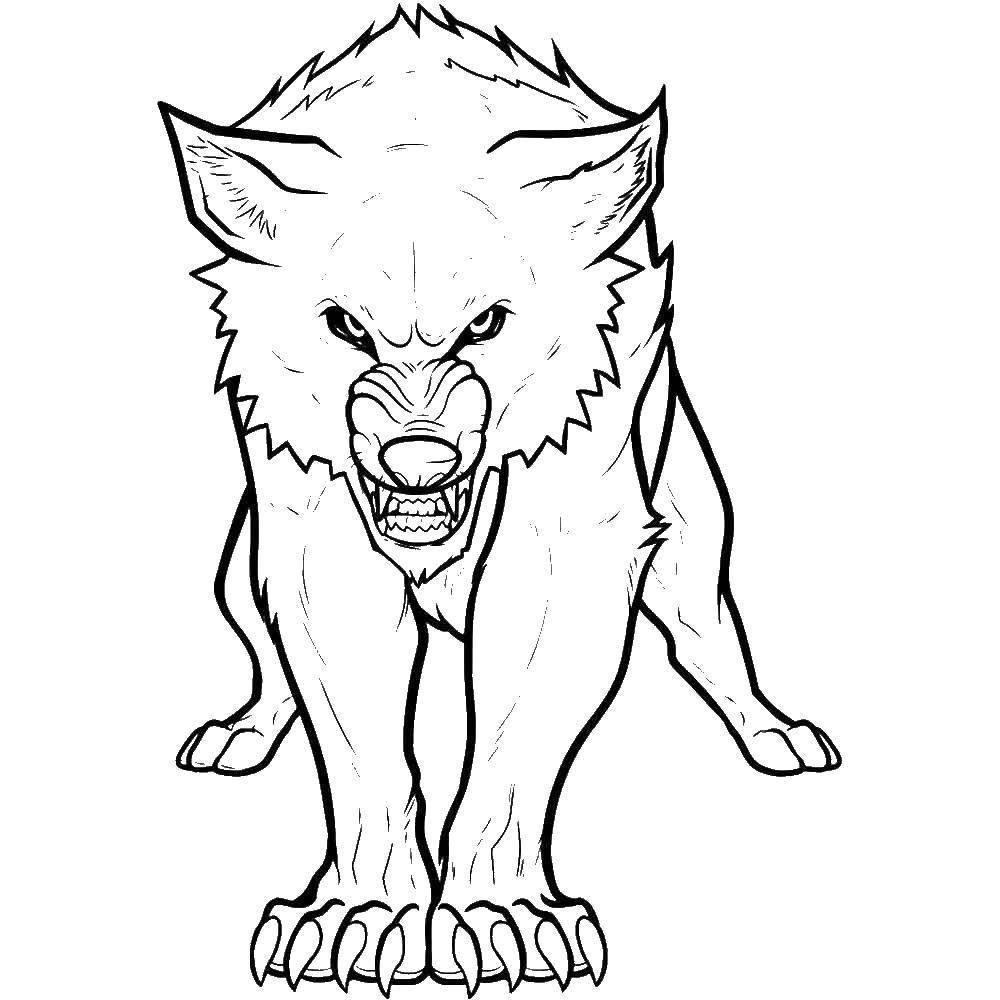 раскраски волк раскраска волк