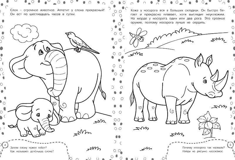 Носорог и слон