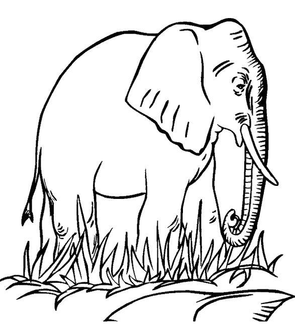 Слон ходит по траве