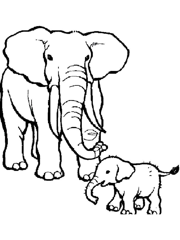Раскраска слон и слоненок