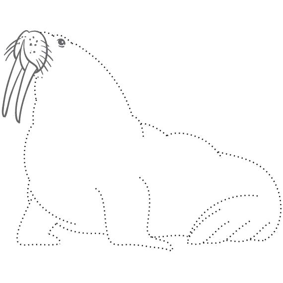 раскраски морж раскраска