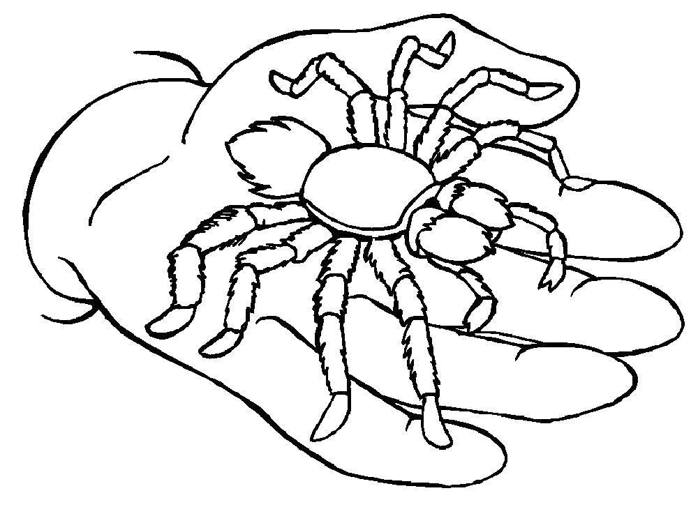 Раскраска паук