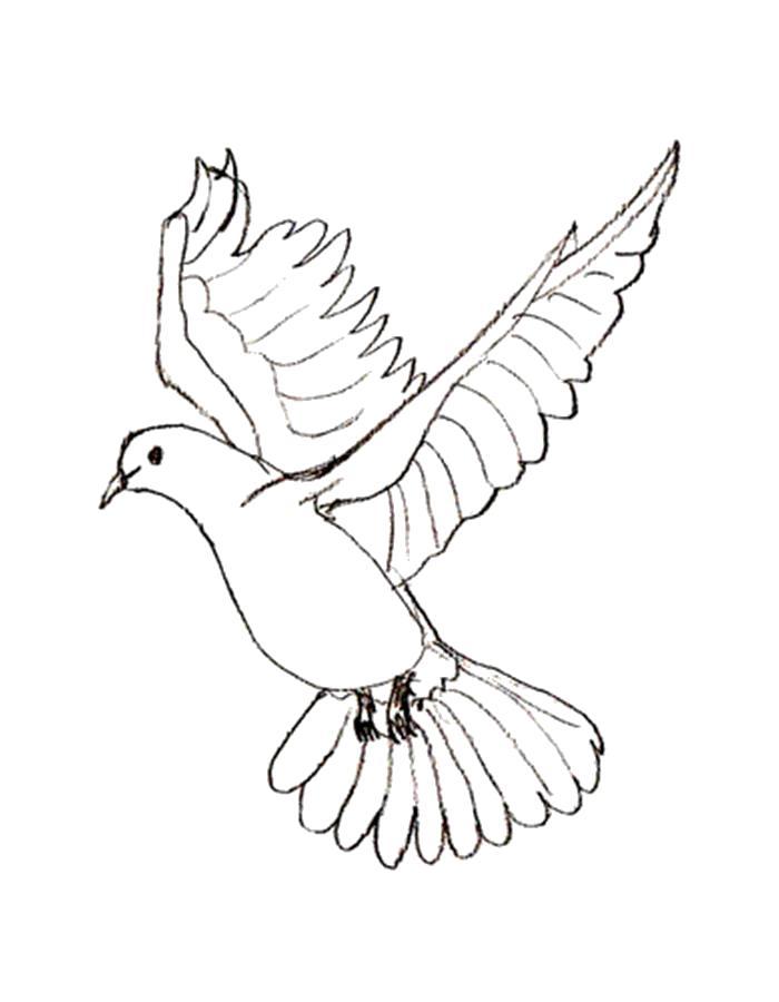 Раскраски с птицей голубь  Раскраска голубь летит