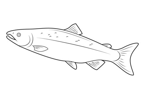 Раскраски акула раскраска
